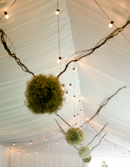 Occasions Festoon Lighting
